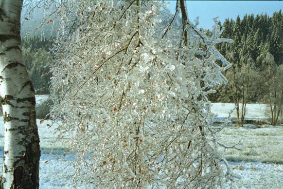 hiver 1998